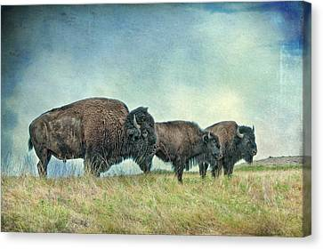 Three In A Row Canvas Print by Tamyra Ayles