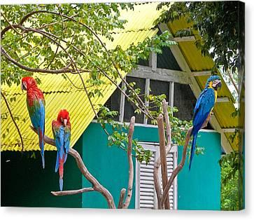 Three Parrots Canvas Print by Ann Murphy