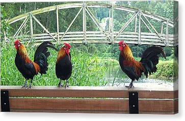 Three Roosters  Canvas Print by Peter Mooyman