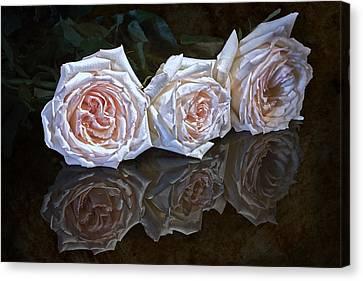 Three Roses Still Life Canvas Print by Tom Mc Nemar