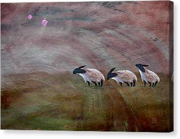 Three Sheep In The Wind And Pigs Fly Canvas Print