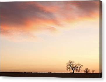 Three Trees Sunrise Sky Landscape Canvas Print by James BO  Insogna
