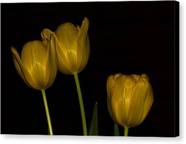 Canvas Print featuring the photograph Three Tulips by Ed Gleichman