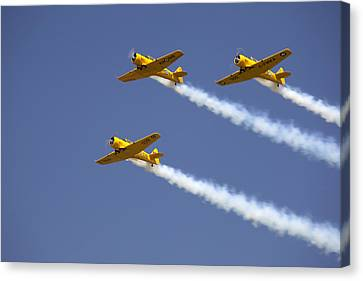 Three Yellow Harvards Flying In Unison Canvas Print by Pete Ryan