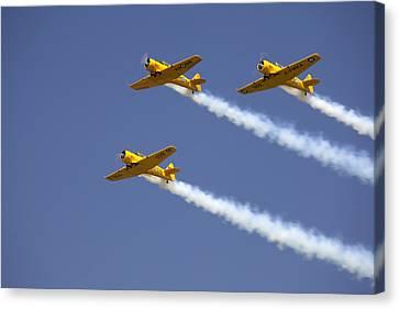 Three Yellow Harvards Flying In Unison Canvas Print