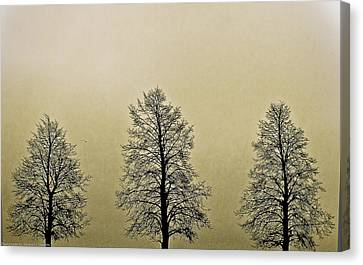 Threes Canvas Print by Michael Nowotny