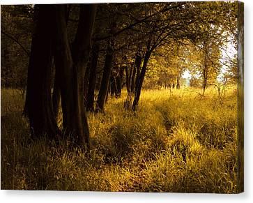 Through Enchanted Forest Canvas Print by Bogdan M Nicolae