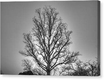 Through The Boughs Bw Canvas Print by Dan Stone
