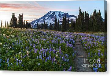 Through The Flowers Canvas Print by Mike Reid