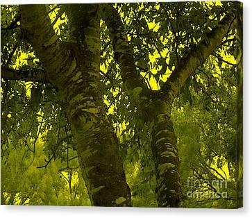 Through The Green Man's Eyes Canvas Print by Tammy Herrin