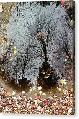 Through The Looking Glass Canvas Print by Elijah Brook