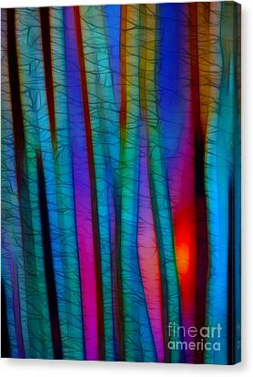 Through The Trees Canvas Print by Judi Bagwell