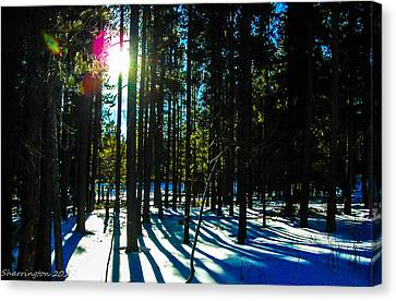 Canvas Print featuring the photograph Through The Trees by Shannon Harrington