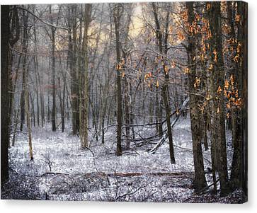 Canvas Print featuring the photograph Through The Woods Into The Sunset by Yelena Rozov