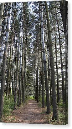 Canvas Print featuring the photograph Through The Woods by Jeannette Hunt