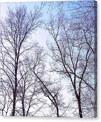 Canvas Print featuring the photograph Through To Heaven by Pamela Hyde Wilson