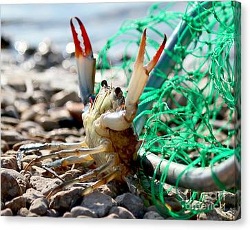 Canvas Print featuring the photograph Crab Throw Me Something Mister by Luana K Perez