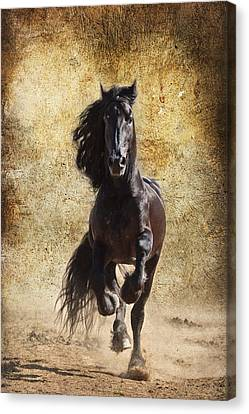 Thundering Stallion D6574 Canvas Print by Wes and Dotty Weber