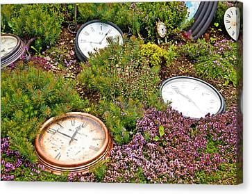 Thyme And Time Canvas Print by Chris Thaxter