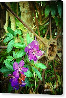 Tibouchina Canvas Print by Therese Alcorn