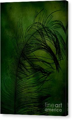 Canvas Print featuring the photograph Tickled Green by Robin Dickinson