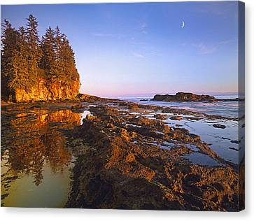 Tidepools Exposed At Low Tide Botanical Canvas Print by Tim Fitzharris
