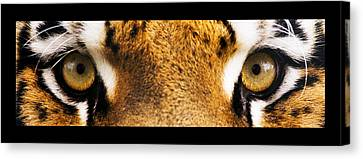 Tiger Eyes Canvas Print by Sumit Mehndiratta