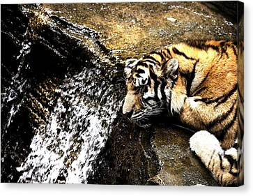 Tiger Falls Canvas Print by Angela Rath