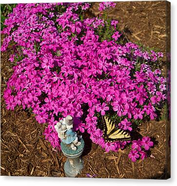 Tiger In The Phlox Canvas Print
