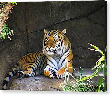 Canvas Print featuring the photograph Tiger Life by Wendy McKennon