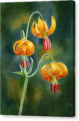 Tiger Lilies #3 Canvas Print by Sharon Freeman