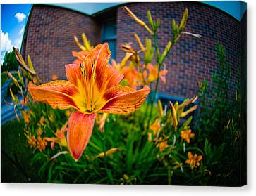 Tiger Lily 05 Canvas Print by Ken Beatty