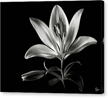 Tiger Lily In Black And White Canvas Print by Endre Balogh