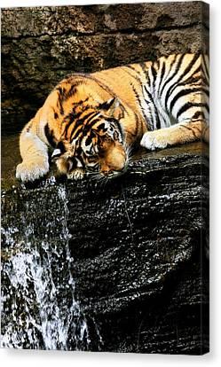 Tiger Paw Canvas Print by Angela Rath