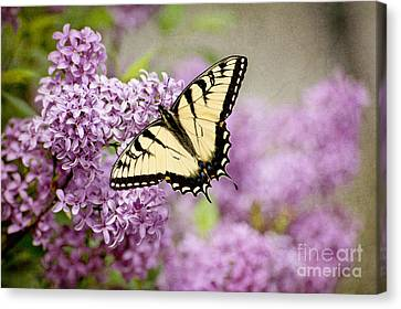 Canvas Print featuring the photograph Tiger Swallowtail On Lilac Textured by Cheryl Davis
