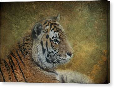 Tigerlily Canvas Print by Claudia Moeckel