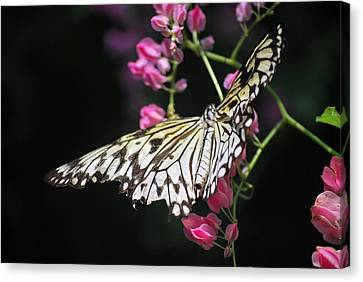 Tilted Pink Canvas Print by Amee Cave