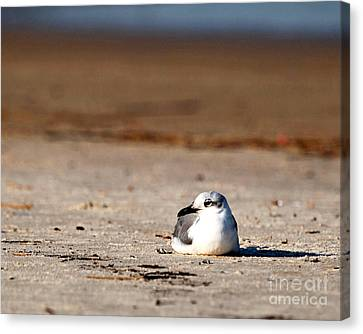 Canvas Print featuring the photograph Time Alone by Luana K Perez