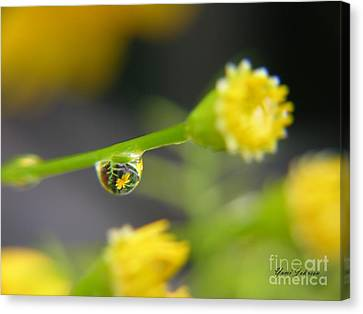 Canvas Print featuring the photograph Tiney Drop by Yumi Johnson