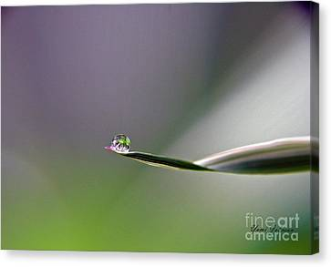 Canvas Print featuring the photograph Tiny Finger by Yumi Johnson