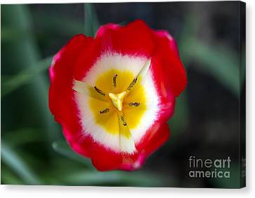 Tiny Fireball Canvas Print