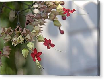 Canvas Print featuring the photograph Tiny Flowers by Lou Belcher