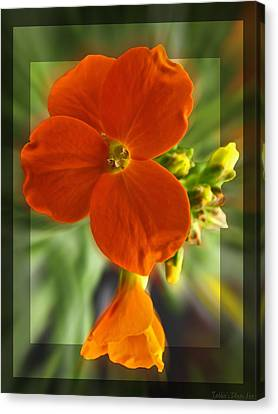 Canvas Print featuring the photograph Tiny Orange Flower by Debbie Portwood