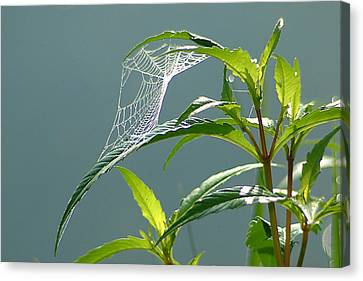 Canvas Print featuring the photograph Tiny Web by Peg Toliver