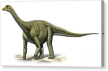 Titanosaurus Indicus, A Prehistoric Era Canvas Print by Sergey Krasovskiy