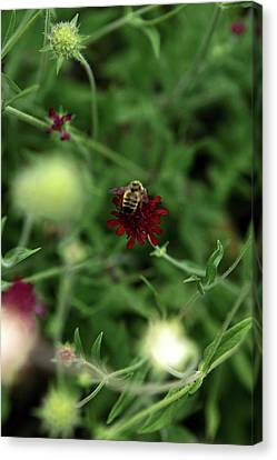 Canvas Print featuring the photograph To Bee by Lorraine Devon Wilke
