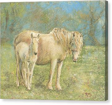 Together New Forest Pony And Foal Canvas Print by Richard James Digance