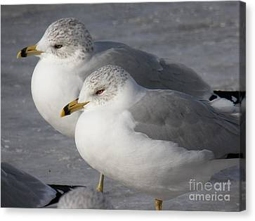Togetherness Canvas Print by Judy Via-Wolff