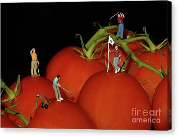 Tomato Beach Golf Classsic Canvas Print by Bob Christopher