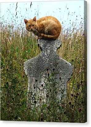 Tombstone Cat Canvas Print by Still Watters